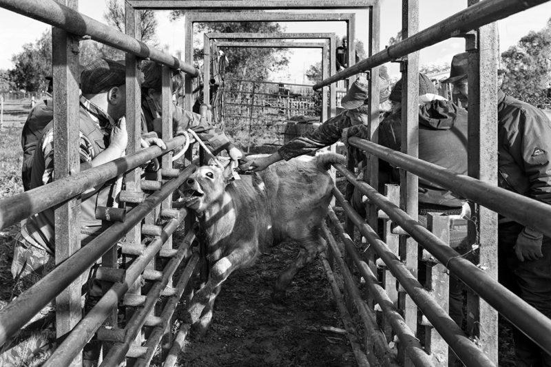 Basta carne da Macello allevamenti