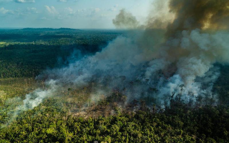 epidemia distruzione amazzonia