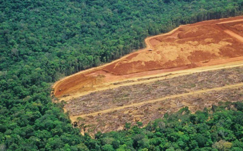 necessità deforestazione