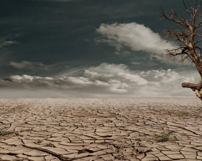 covid distruzione ambientale