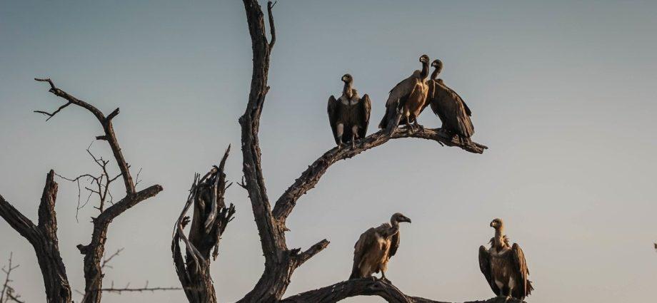 default avvoltoi