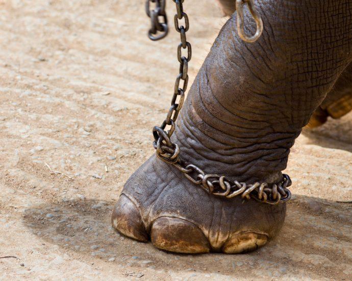 sfruttamento degli animali circo